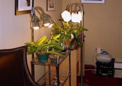 Когда отцвела орхидея что с ней делать