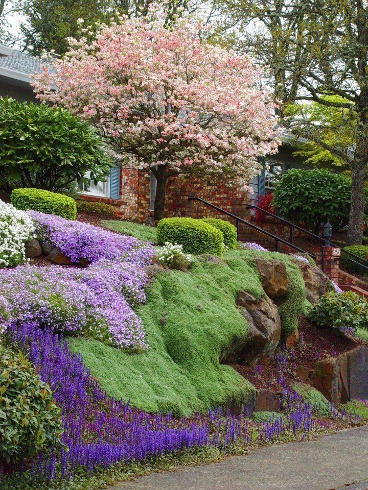 Стелющиеся многолетние цветы