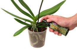 Что делать если погибает орхидея