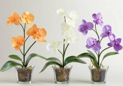 Белые жучки на орхидее как избавиться