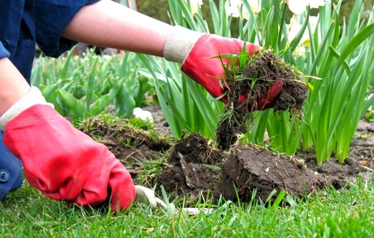 Многолетние почвопокровные растения