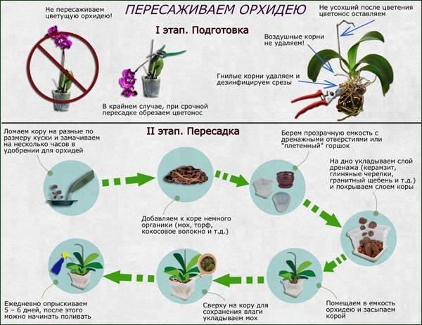 Когда отцветает орхидея что делать