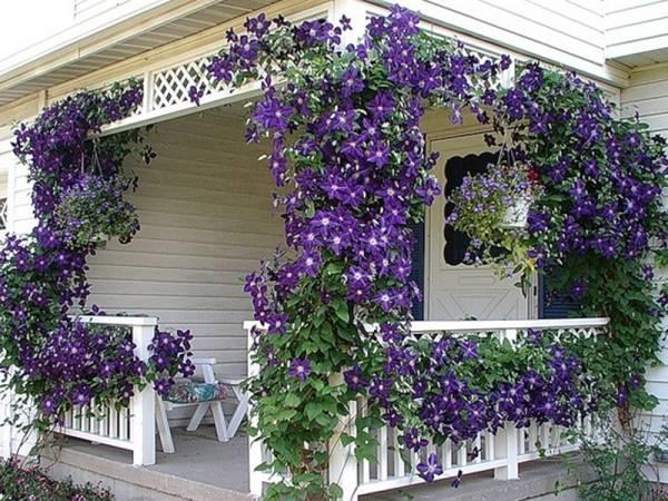 Фиолетовый цветок название