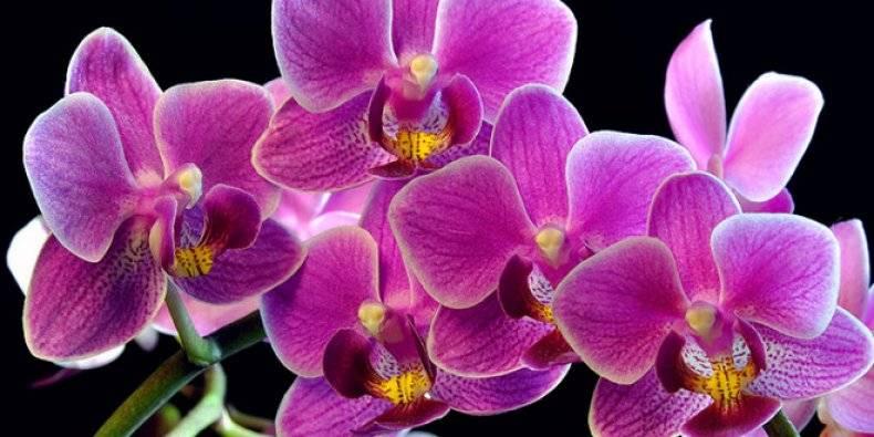 Паста для орхидей