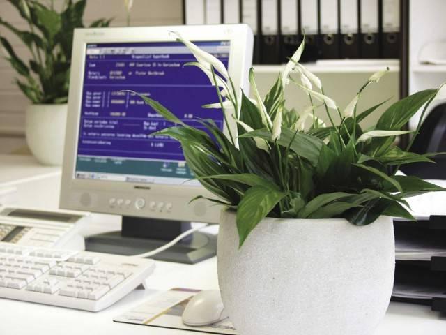 Офисные цветы