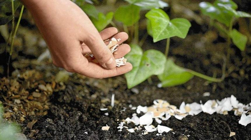 Удобрение для домашних цветов своими руками
