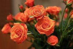 Розы оранжевые сорта