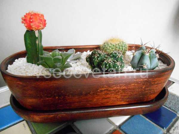Кактусы в аквариуме как сделать