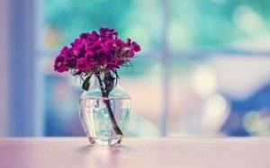 Турецкая гвоздика у вазе