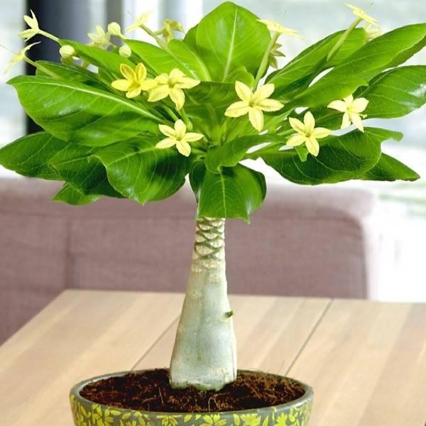 Домашний цветок с листьями как у пальмы 177