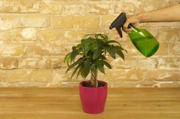 Чем вывести тлю с домашних цветов