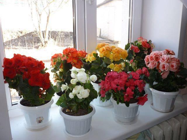 Комнатные растения не требующие много света