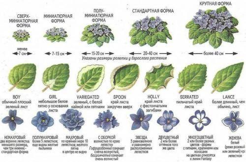Как узнать название комнатного цветка по описанию