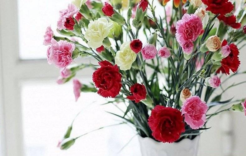 Как дольше сохранить срезанные розы