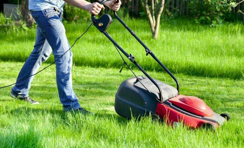 Посеять газонную траву