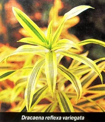 Цветы похожие на пальму