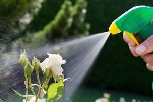 Как сохранить цветы в вазе подольше розы