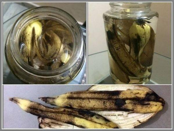 Подкормка банановыми шкурками комнатных цветов 6