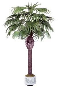 Почему желтеют листья у пальмы