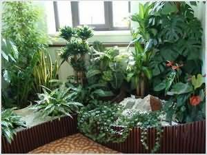 Денежное дерево комнатное растение полезные свойства