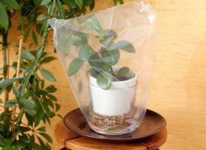 Автополив растений - укрываем вазон пленкой