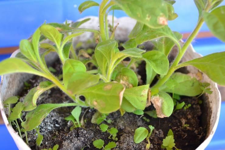 Белый налет на домашних растениях