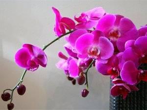 Янтарная кислота таблетки для цветов применение
