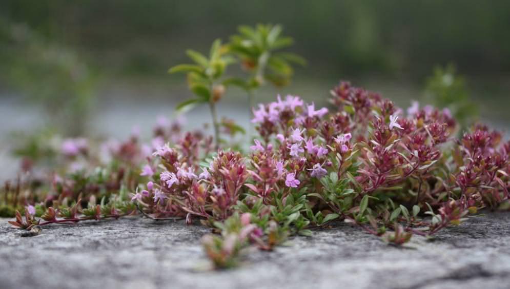 Необычные садовые цветы