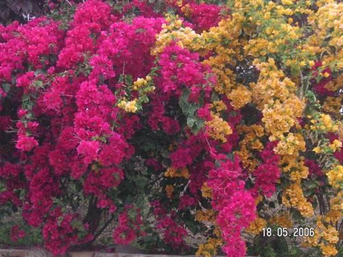 Цветы которые пахнут ночью