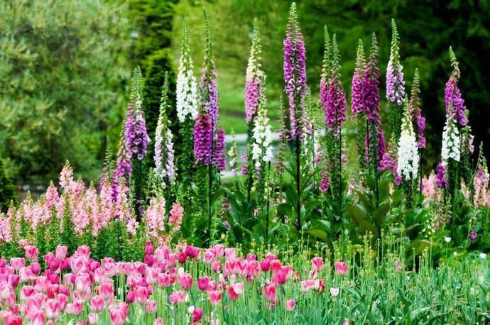 Пурпурный цветок