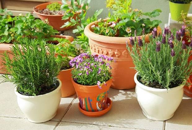 Чем поливать комнатные цветы для обильного цветения 197