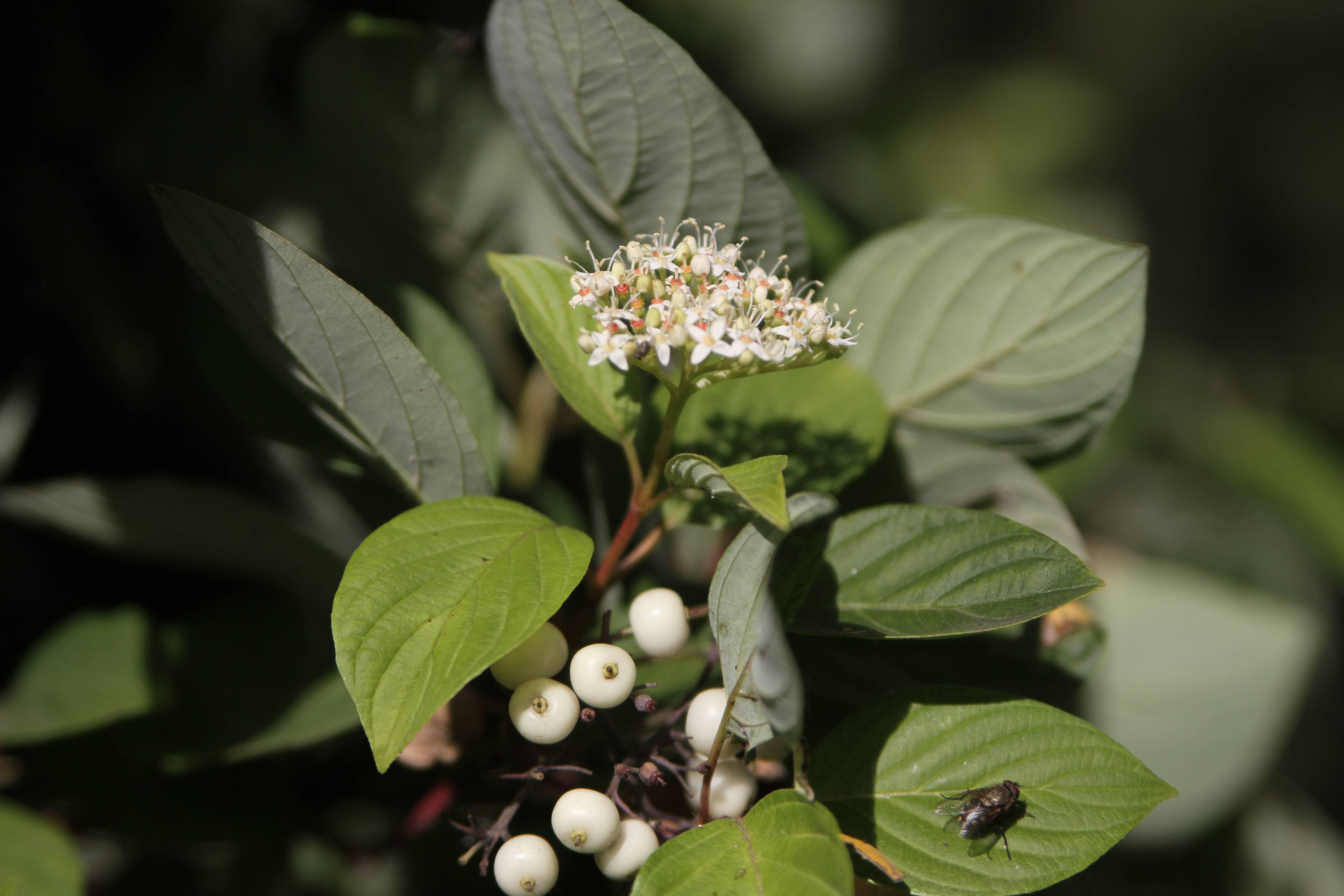 Мелкие белые цветочки как называются