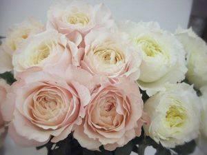 Букет роз пионовидных очень красив.