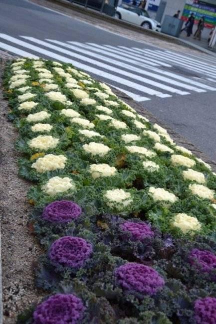 Японский цветок