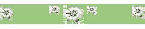 Цветы резеда