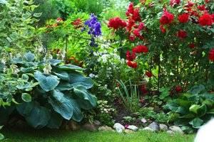 Тенелюбивые многолетники цветущие все лето