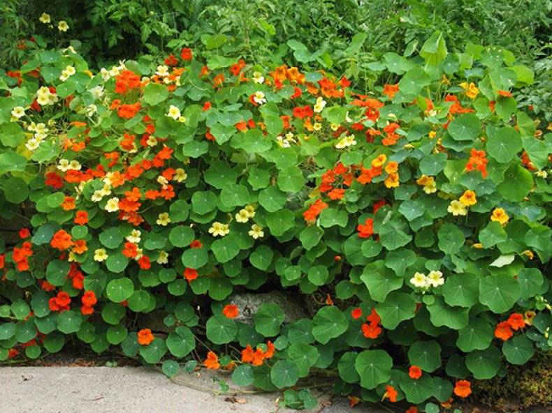 Цветущие ампельные комнатные растения