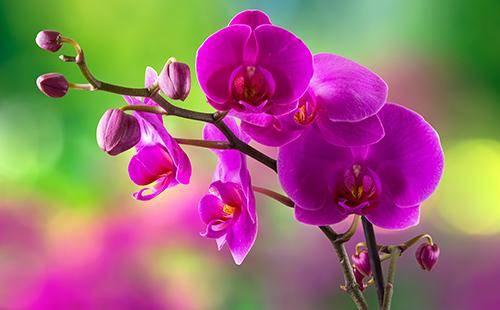 Как вылечить орхидею в домашних условиях