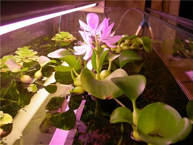 Домашние цветы любящие влагу 111
