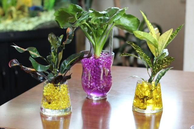 Гидрошарики для цветов