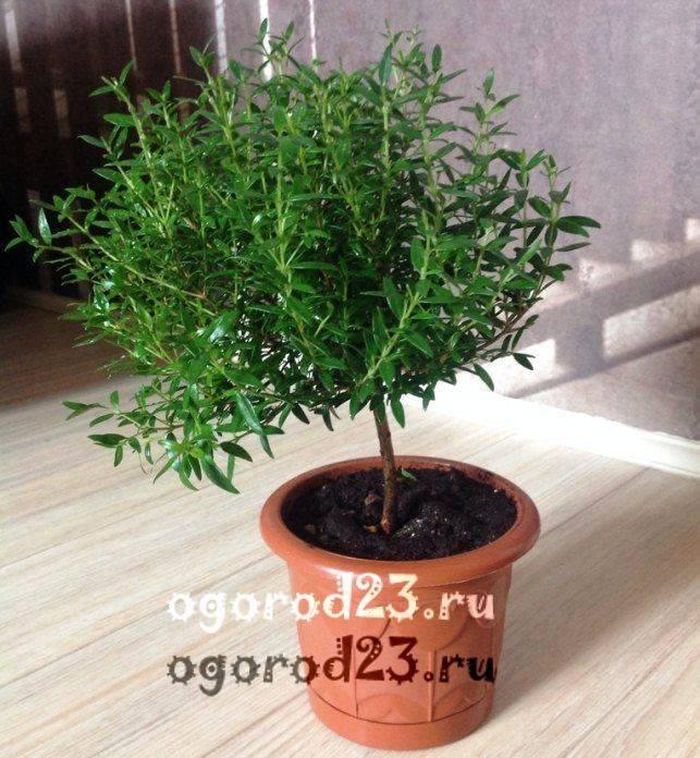 Зеленые комнатные растения
