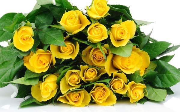 Желтые розы к чему их дарят
