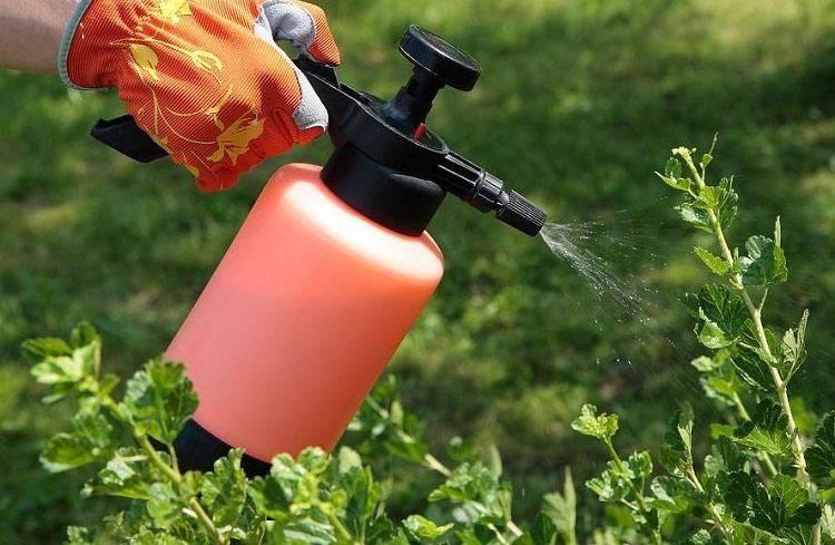 Перекись водорода применение для растений