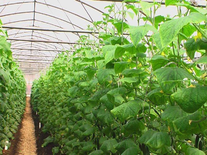 Стимулятор роста растений циркон