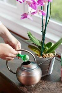 Можно ли подкармливать орхидею во время цветения