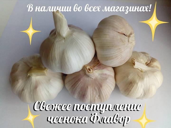Пеларгония orange fizz