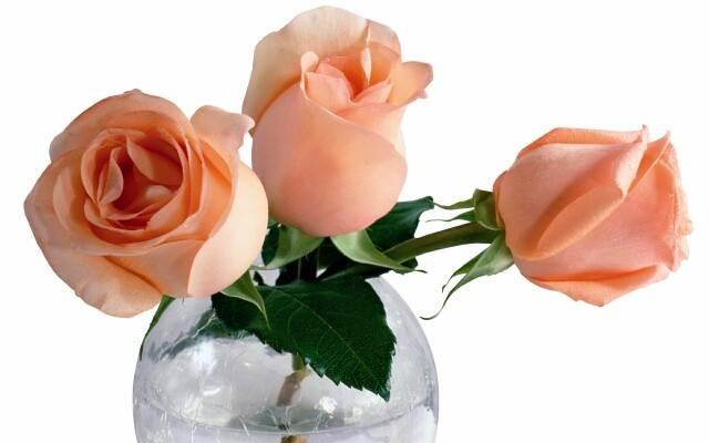 Чтобы розы дольше стояли в воде