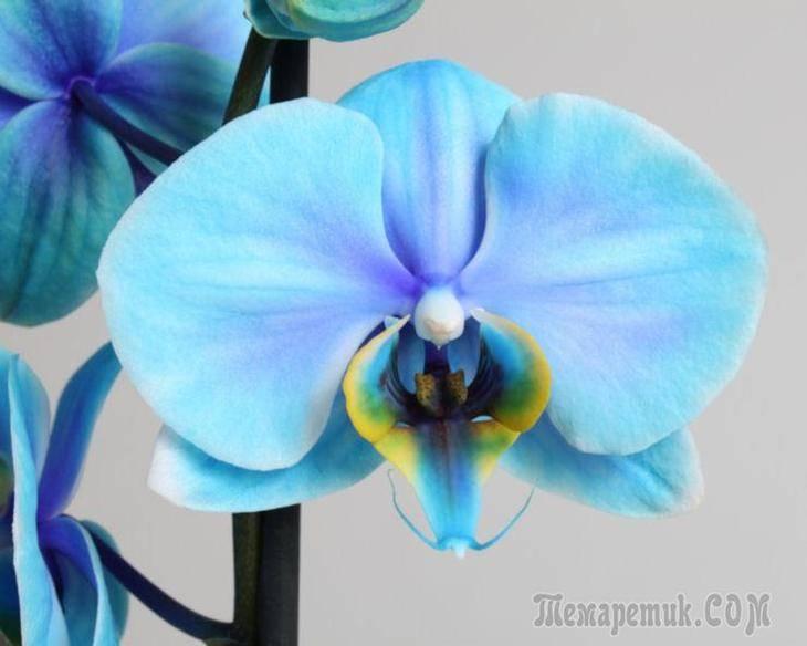 Палочки для орхидей