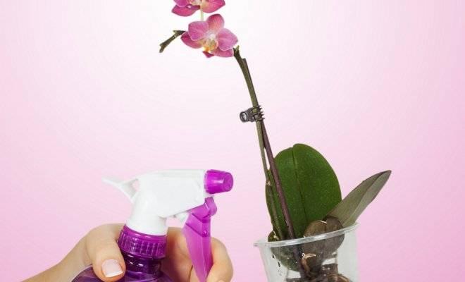 Всё о орхидеях комнатных