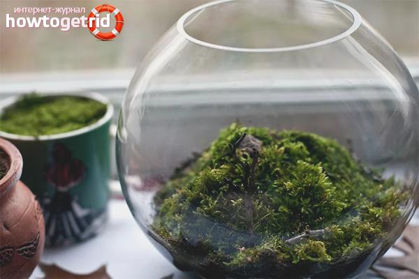 Как вырастить мох сфагнум в домашних условиях